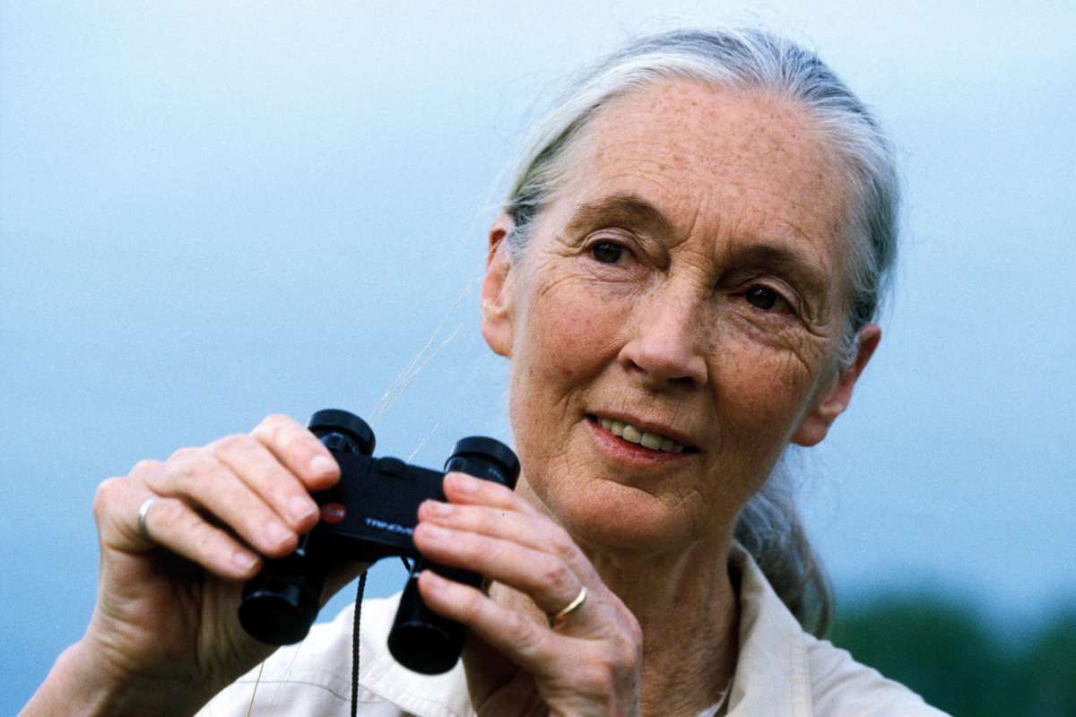 No Jane Doe: The many good works of Jane Goodall