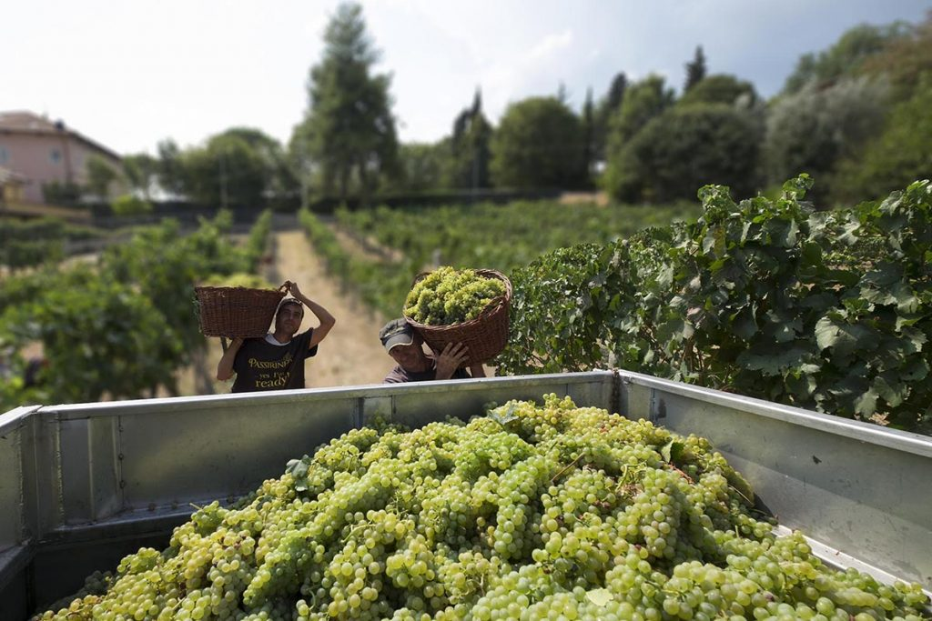 Why Velenosi Winery is Le Marche's Hidden Gem
