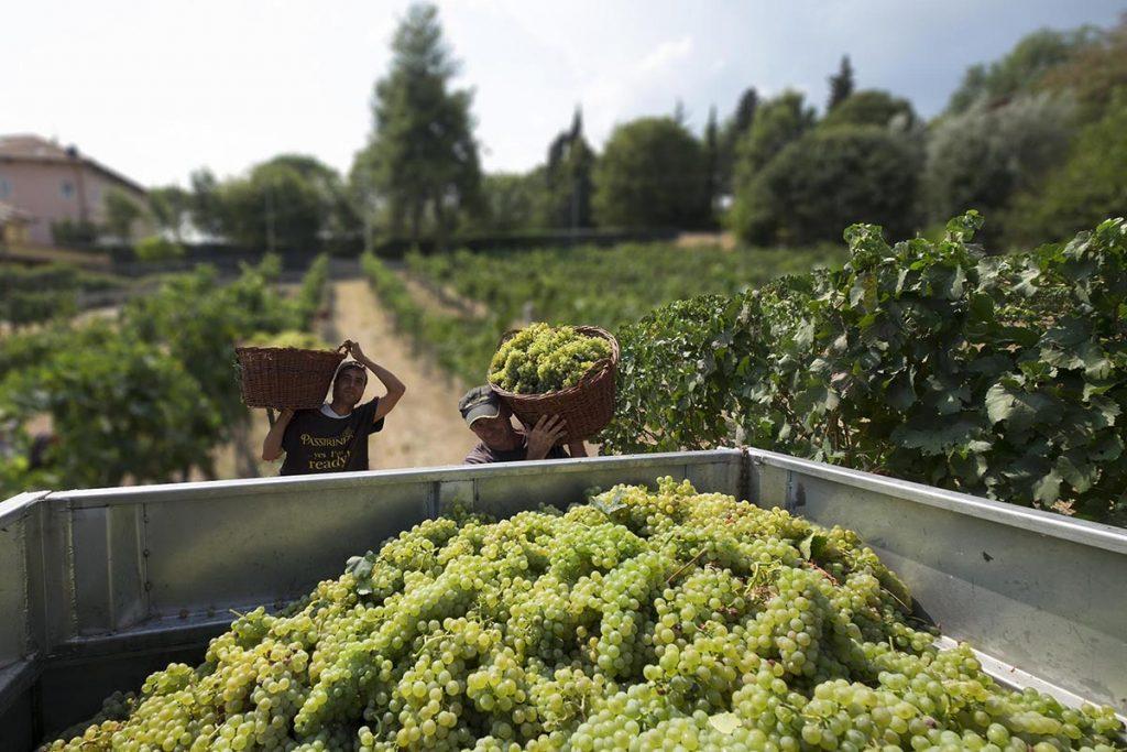 Why Velenosi Winery is Le Marche's Hidden Gem – Prestige Online