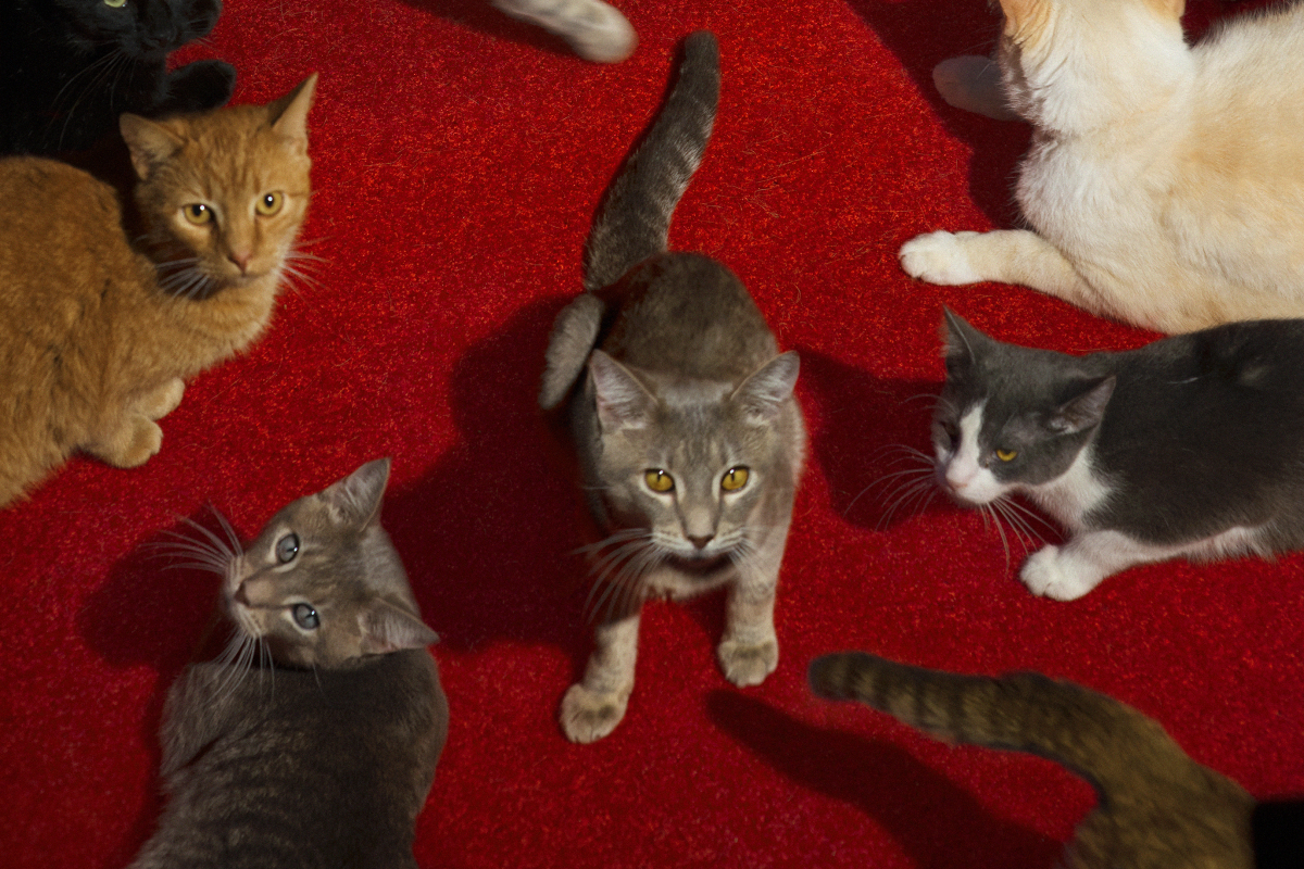 Alex Prager on Cats, Crowds and Commercial Collaborations