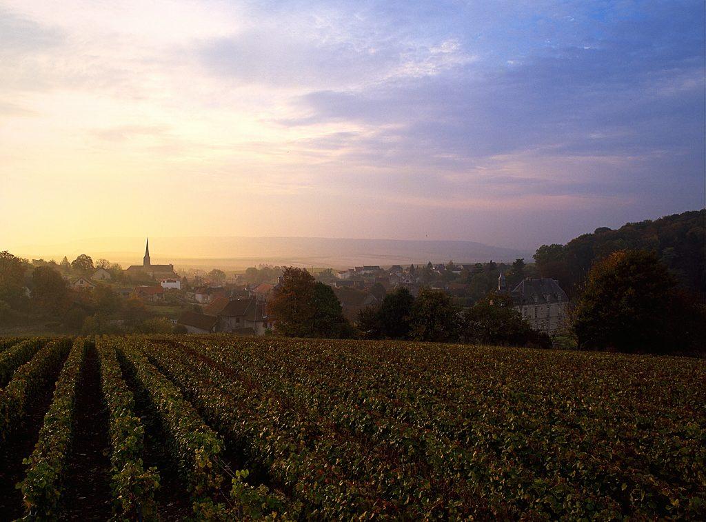 The vineyards of Perrier-Jouët