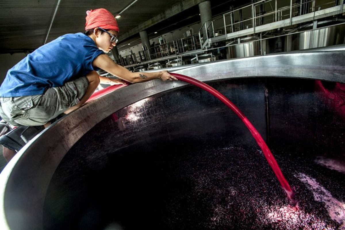First Foreign Female Winemaker: Eugene Mengyao Qiao Of Italian Winery G.D. Vajra