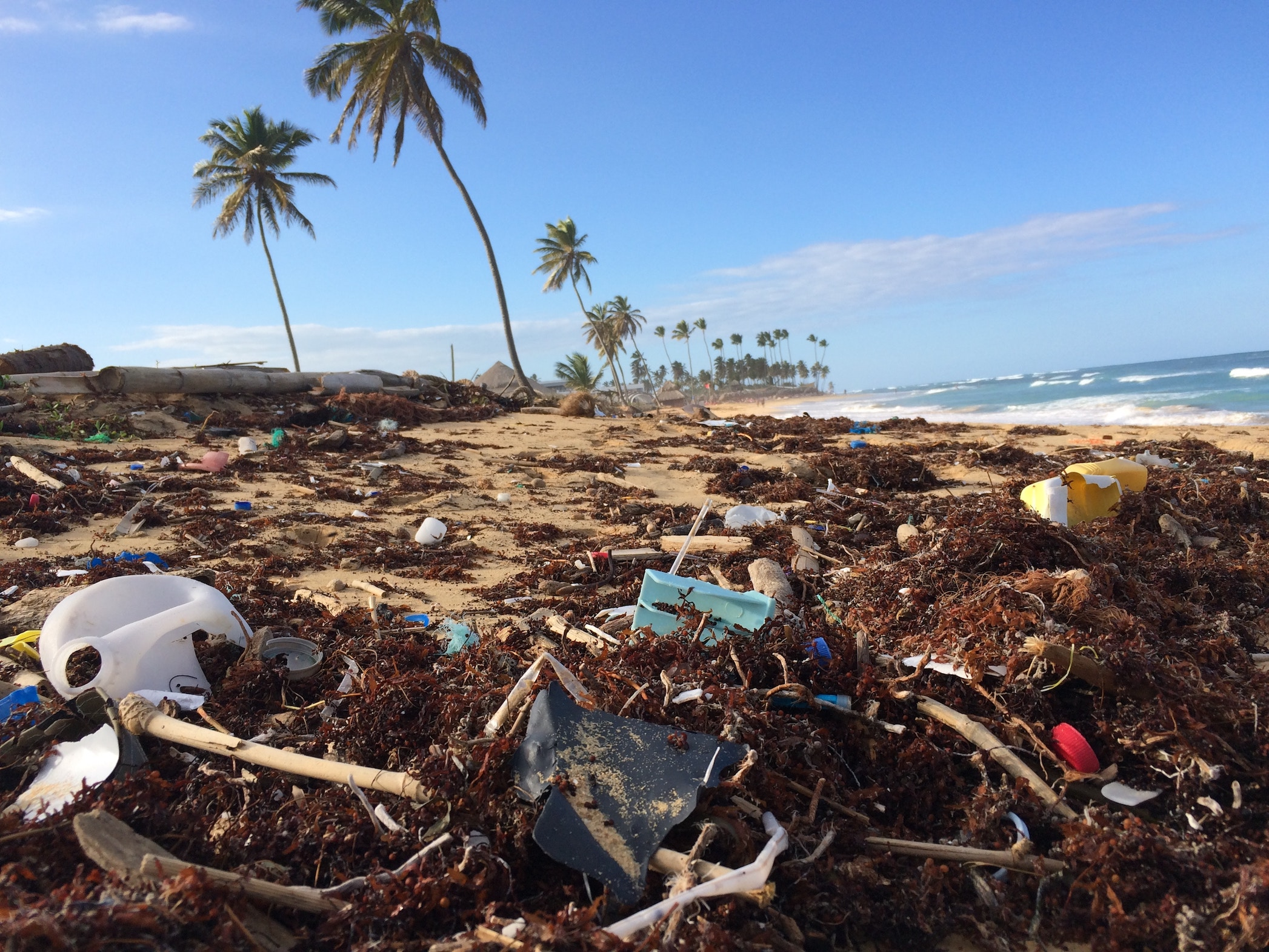 Ocean pollution: plastic straw ban