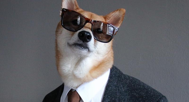 Menswear Dog Bodhi