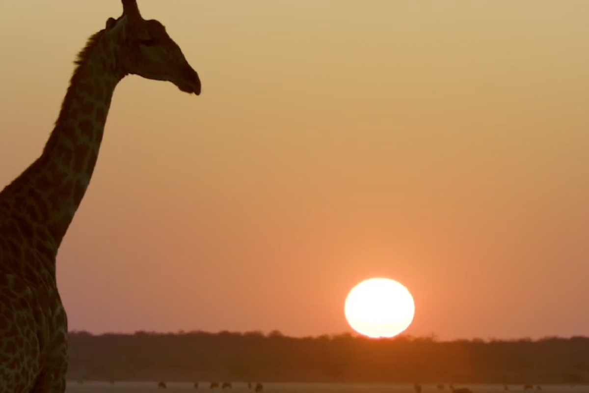 Forevermark Presents: Travelling in Botswana with Annie Griffiths