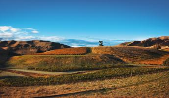 UNMASKING MARLBOROUGH