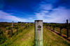 MAHI WINES, MARLBOROUGH