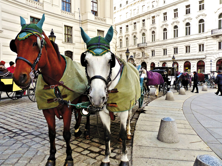 hofburg palace vienna horse riding