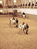 Lippizaner stallions inside Spanish Riding School