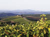 The vineyards at Castiglion del Bosco in Tuscany