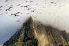Gannets flying near a sea stack. (Credit: Jim Richardson, National Geographic Creative)