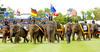 Elephant Polo Parade