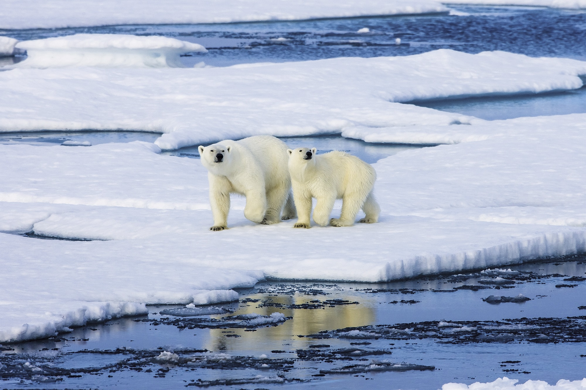 Make the Arctic your Next Exotic Travel Spot