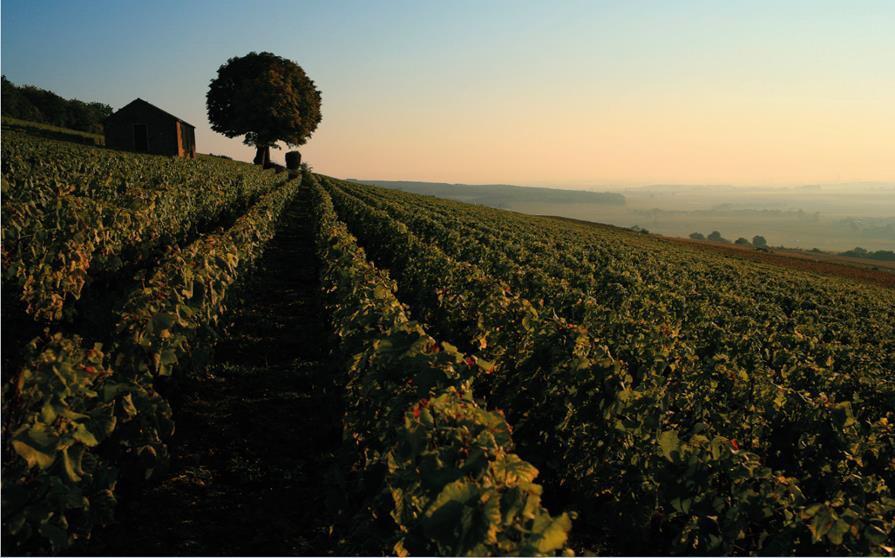 Christie's on wine demand in Asia