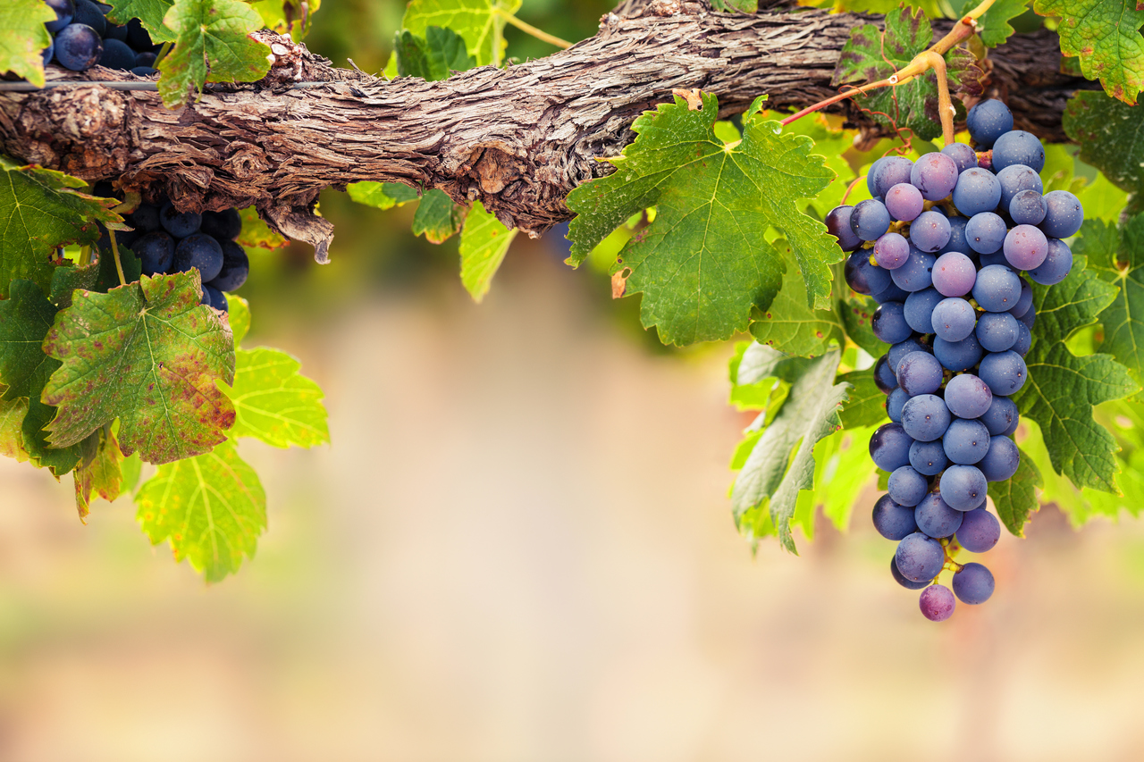 James Suckling's Top 8 Wines of the Syrah Variety