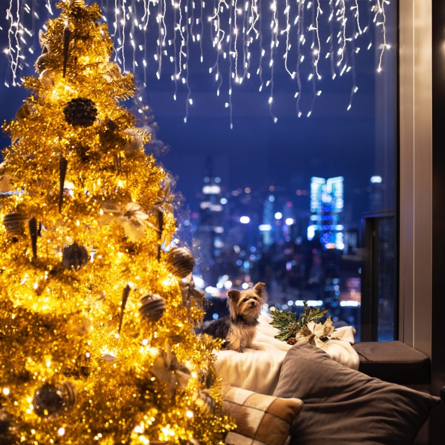 Festive Window Backdrops for the Holidays
