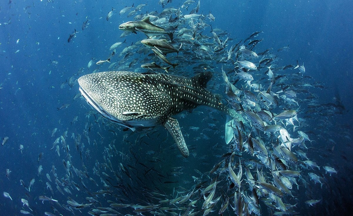 World Ocean Day: 8 Marine Conservation Projects to Support in Asia-Pacific - Prestige Online