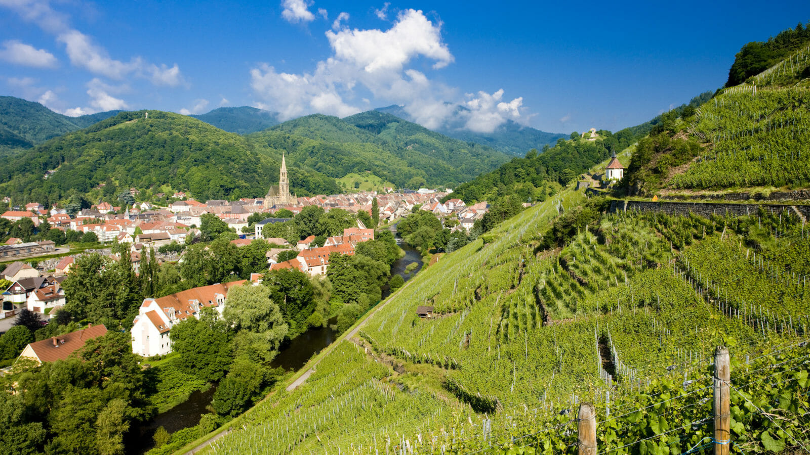 Best of Wine: The Top 10 Grand Cru Wine Bottles