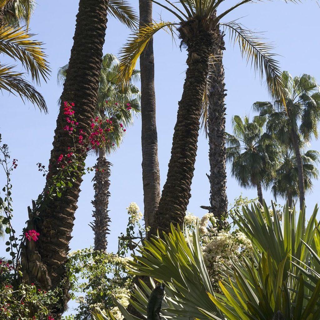 Ourika Gardens