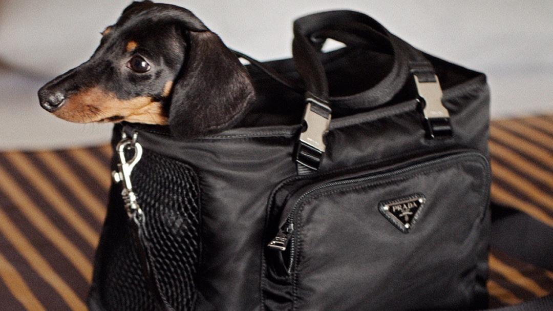 Nylon handbags à la Prada are back in style