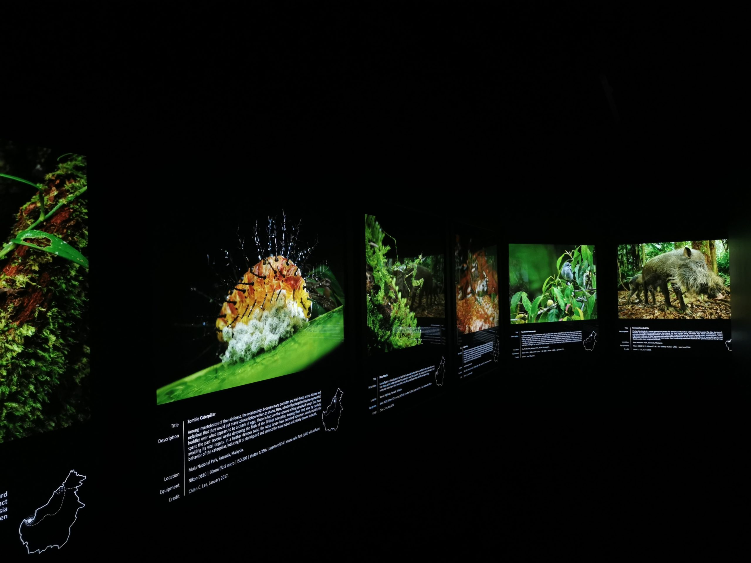 GMBB Borneo's Tree of Life Exhibition