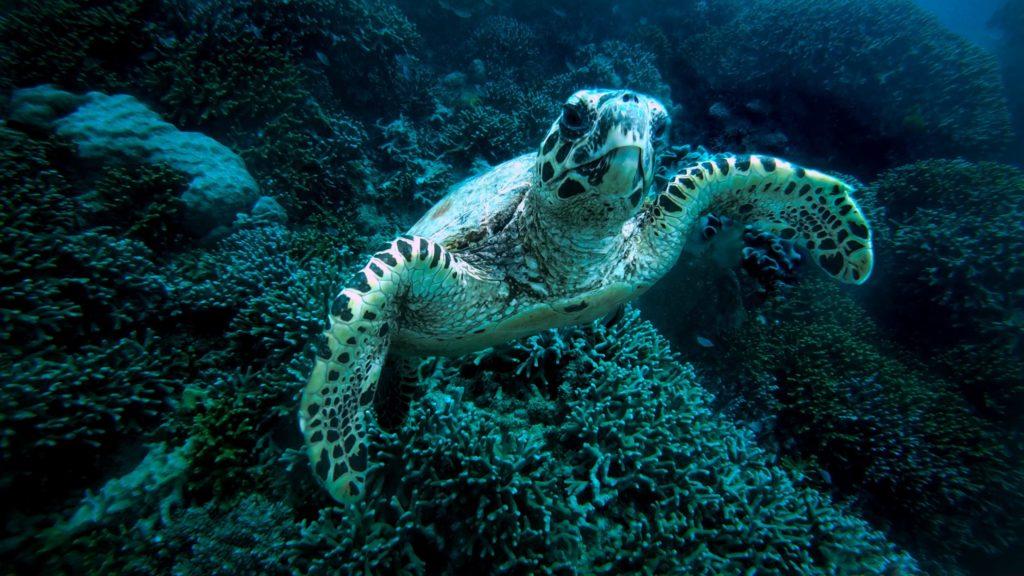 Turtle at ecotourism destination