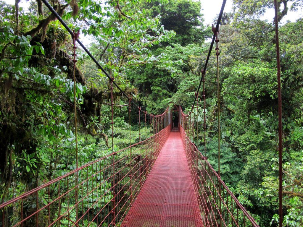 Monteverde Cloud Forest is an ecotourism destination