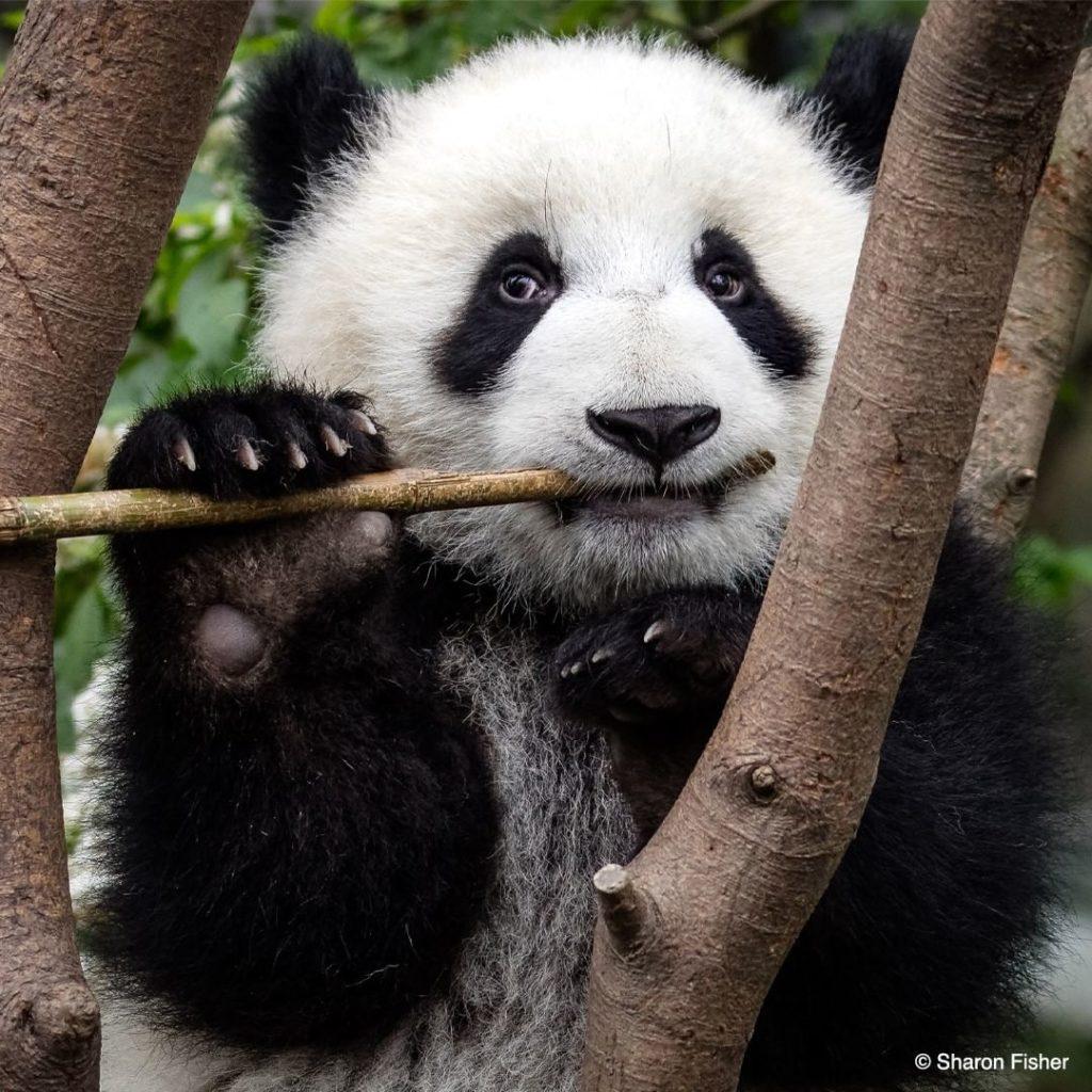 World Wildlife Fund for Nature (WWF)