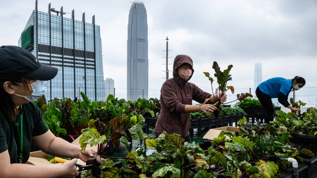 Gardens in the sky: Hong Kong's urban farms are on the rise