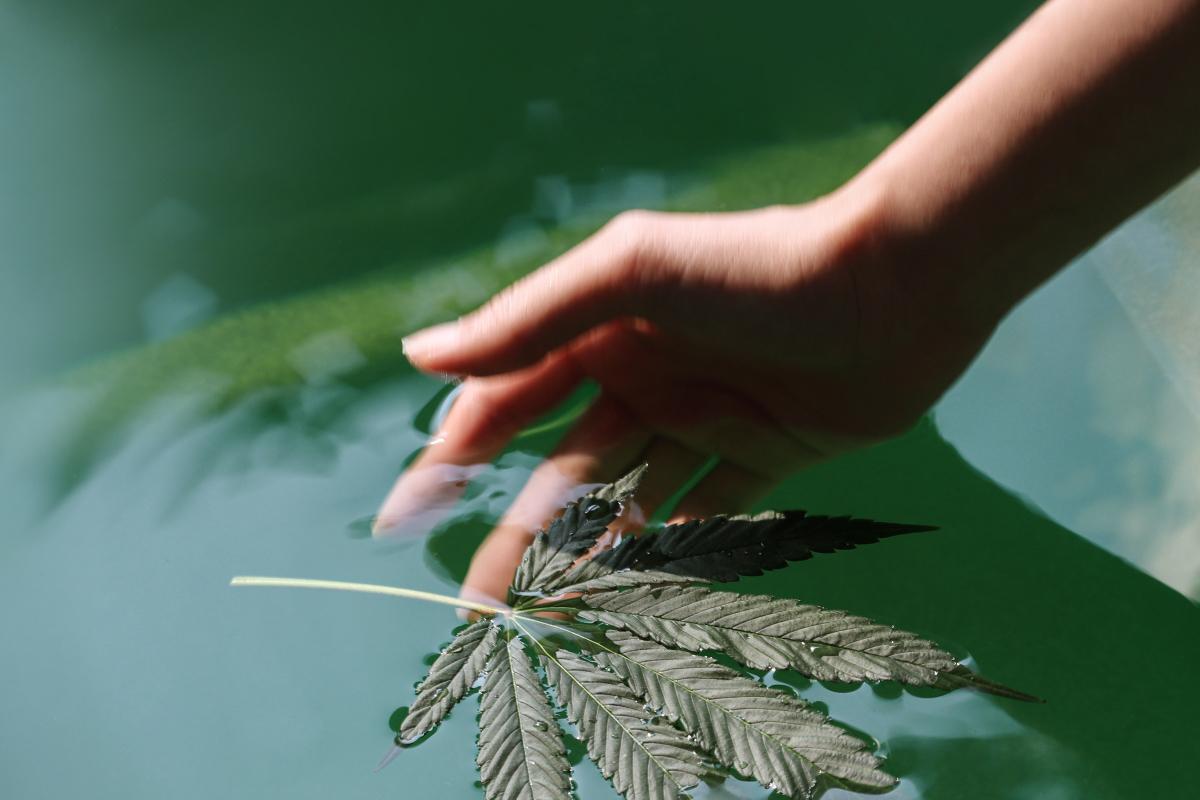 cannabis spa thailand