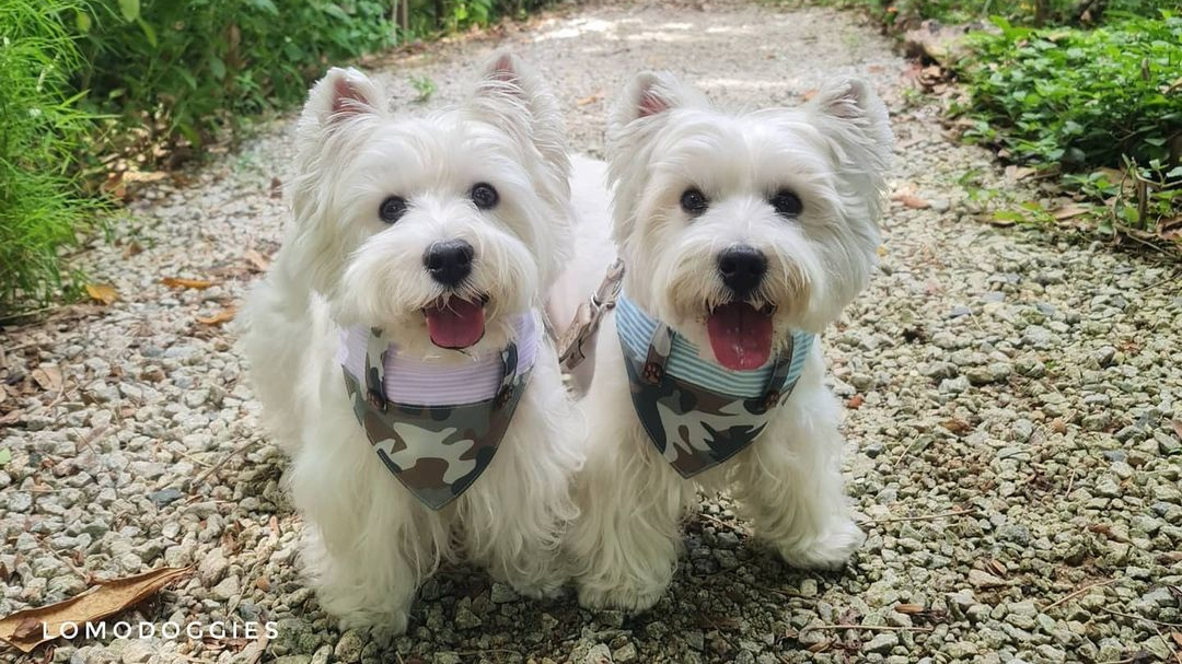 Pet influencers on the rise in Singapore