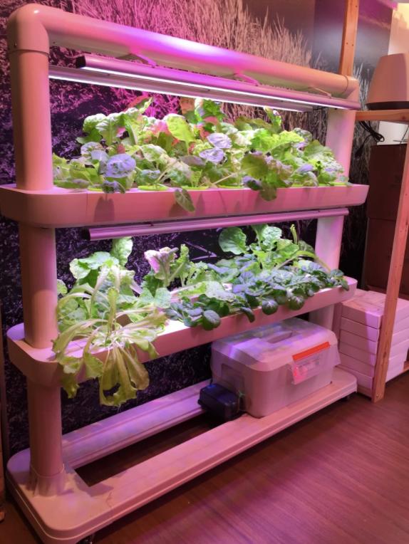 urban gardening kits easi grow