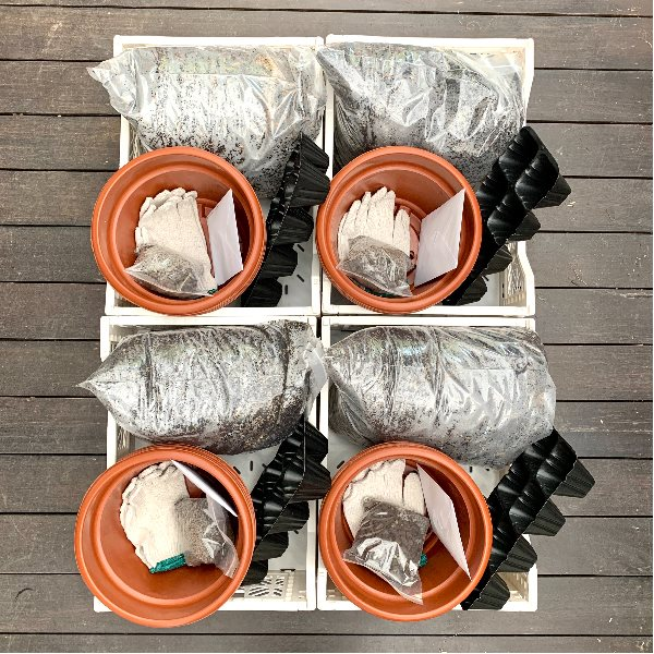 urban gardening kits go pasar