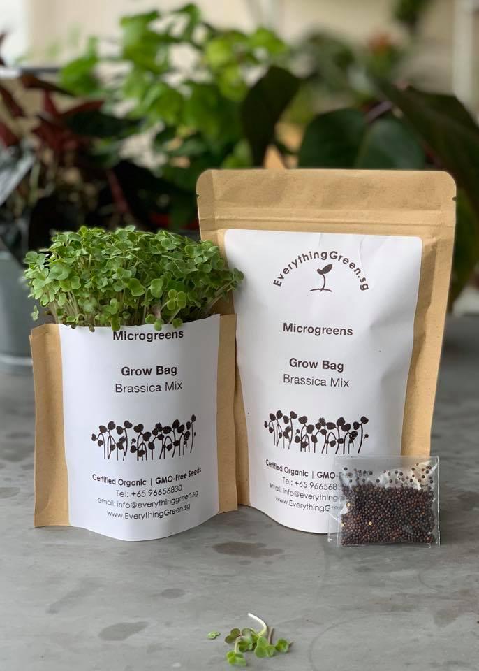 urban gardening kits everything green