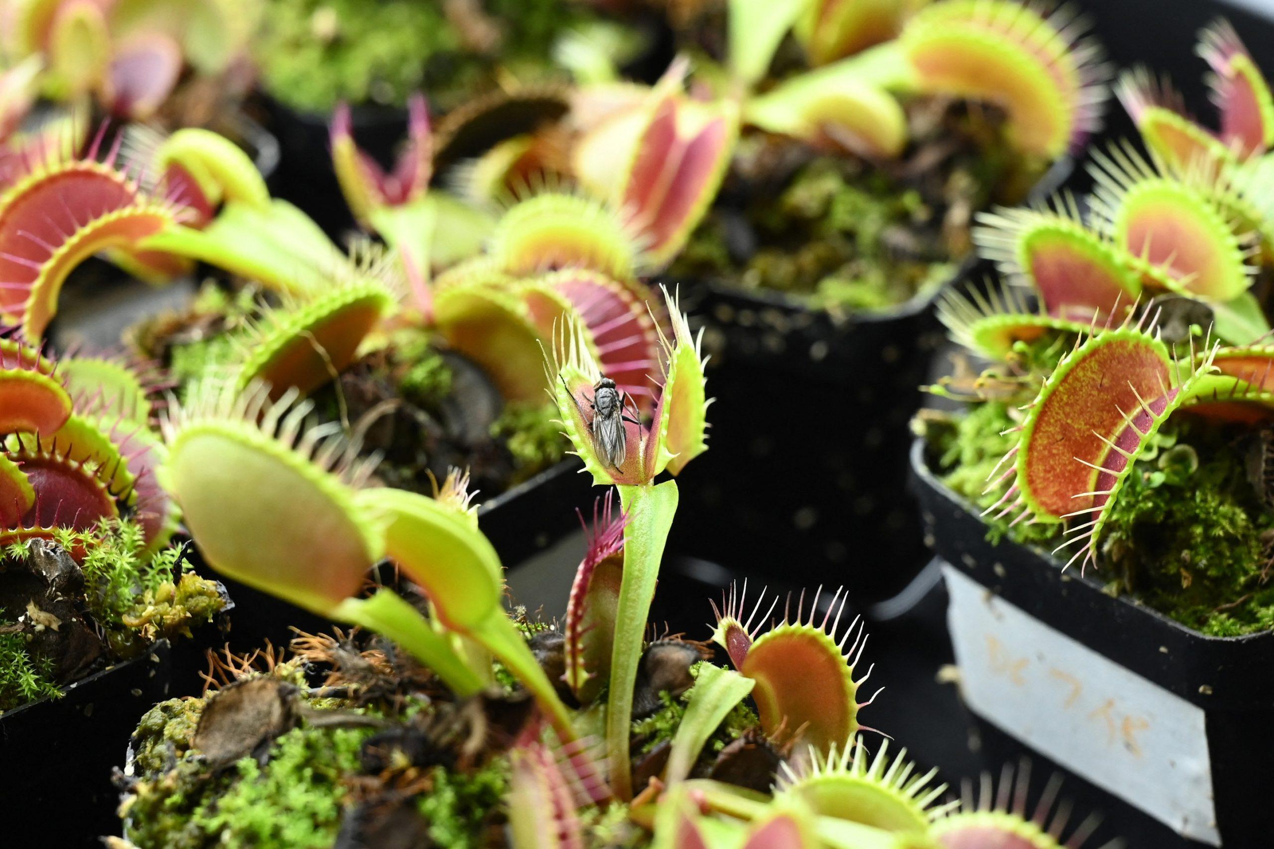 robo-plants