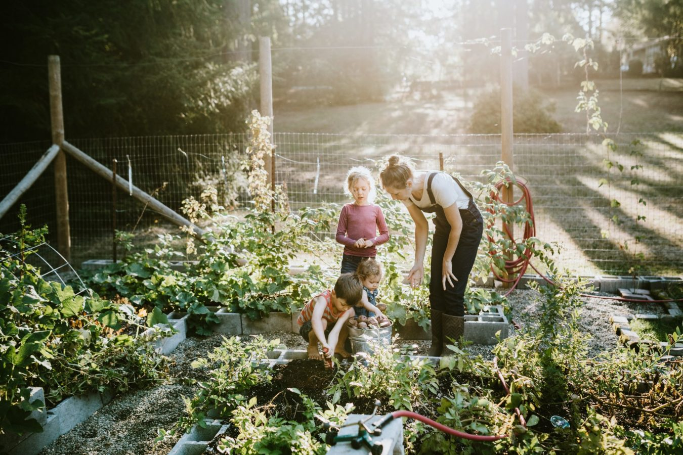 How to keep maggots and flies out of your vegetable garden