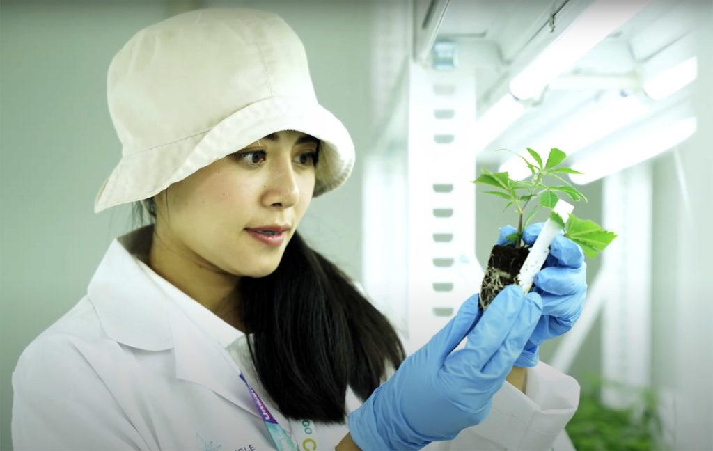GTG scientist