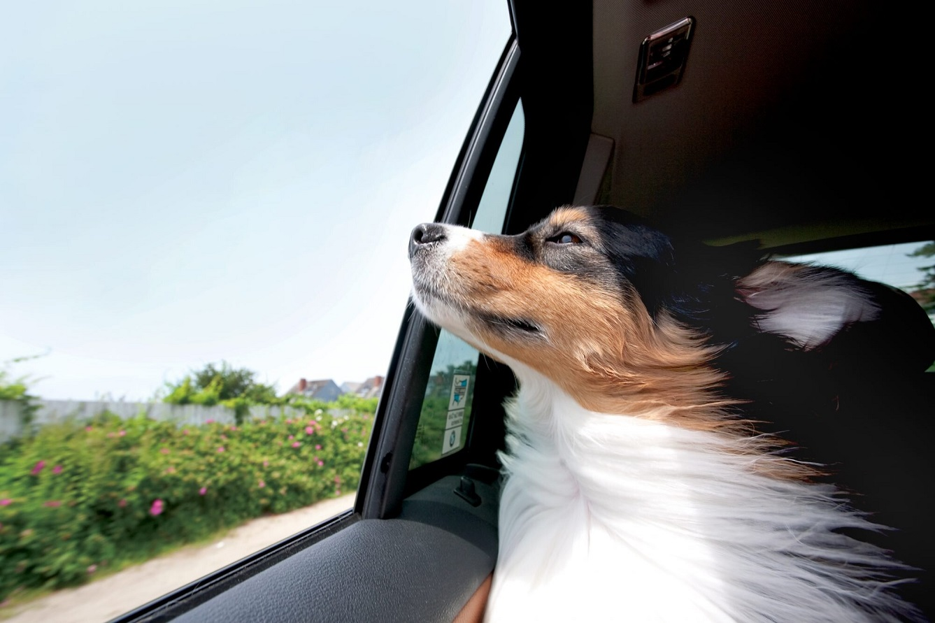 Three Ways to Help Your Dog with Car Anxiety and Motion Sickness