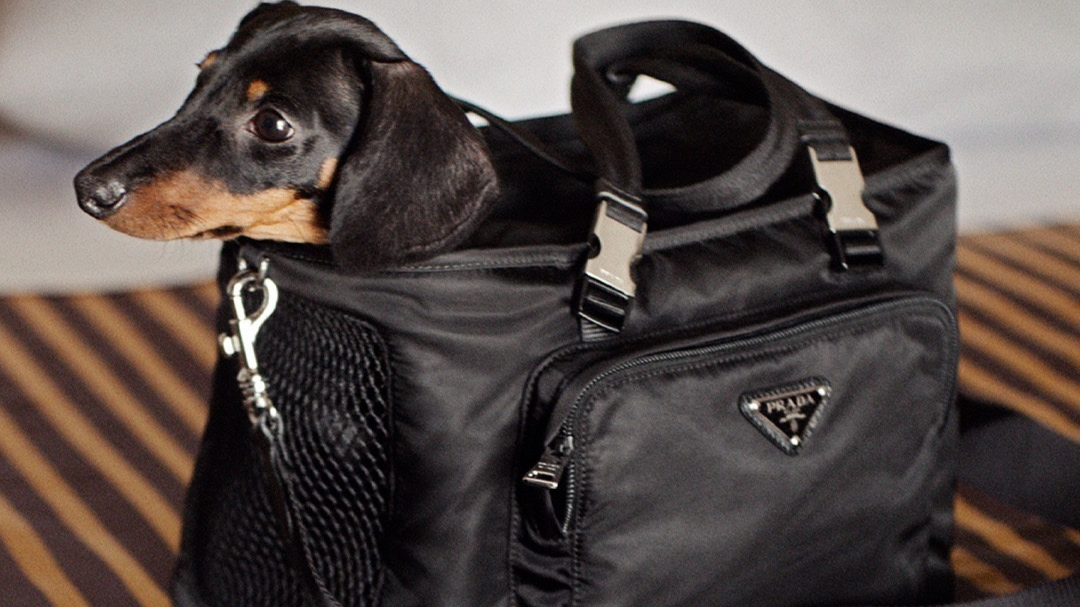 Nylon Handbags à la Prada are Now Back in Style