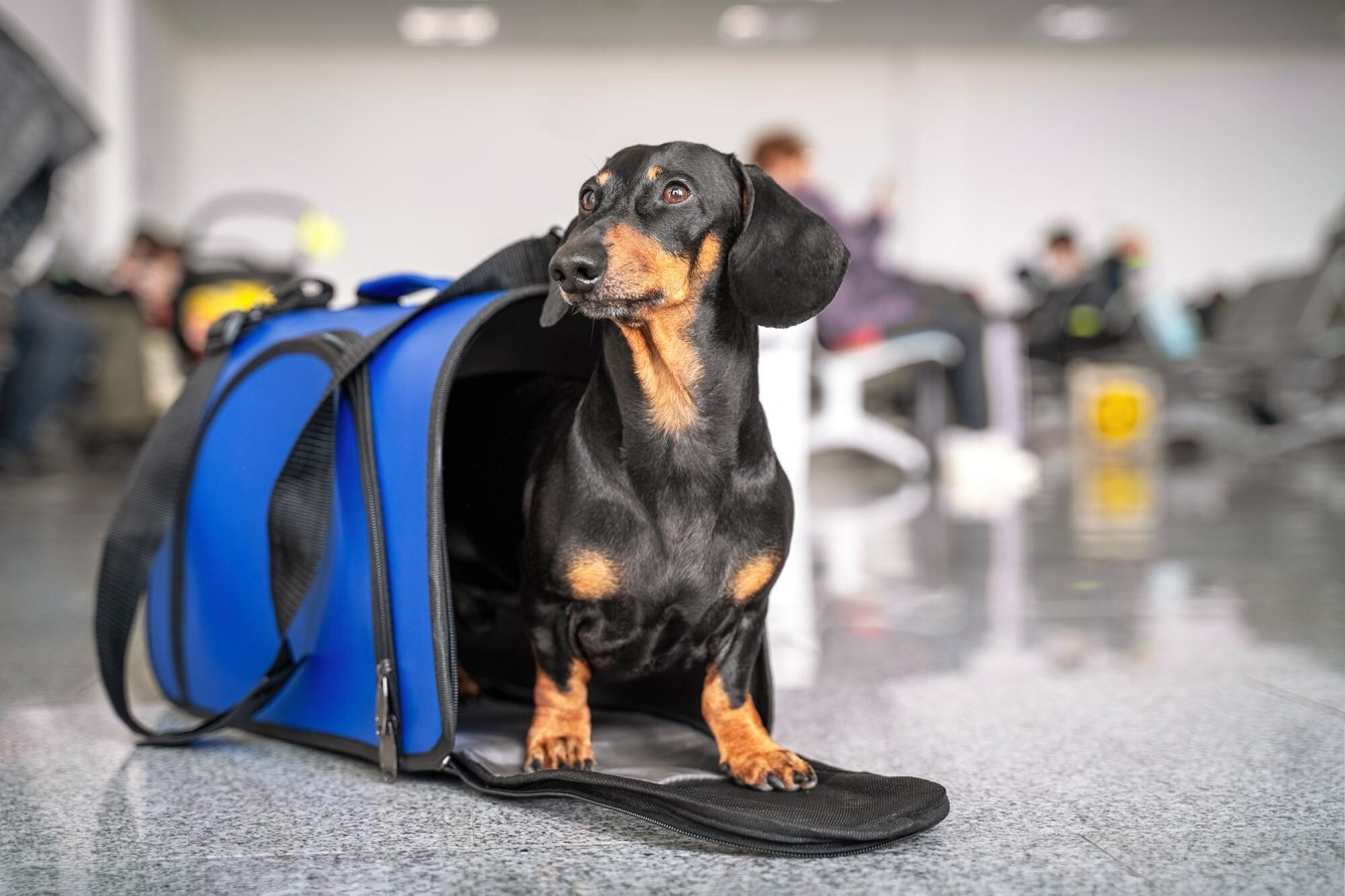 Boarding a Flight with Your Dog? Here's What You Need to Know for Every Step of the Journey